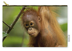 Orangutan Pongo Pygmaeus Baby Swinging Carry-all Pouch by Christophe Courteau