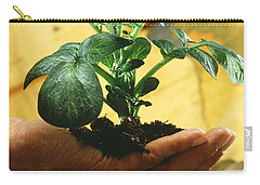 Potato Plant Carry-all Pouch by Science Source