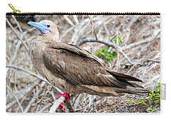 Red Footed Booby Carry-all Pouch by Jess Kraft