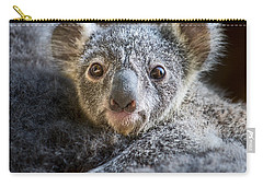 Up Close Koala Joey Carry-all Pouch by Jamie Pham