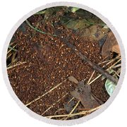 Army Ant Bivouac Site Round Beach Towel by Gregory G. Dimijian, M.D.