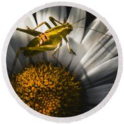 Australian Grasshopper On Flowers. Spring Concept Round Beach Towel by Jorgo Photography - Wall Art Gallery