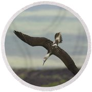 Blue-footed Booby Diving Round Beach Towel by John Shaw