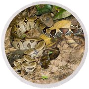 Boa Constrictor Round Beach Towel by Gregory G. Dimijian, M.D.