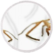 David And Goliath Daddy Longlegs Round Beach Towel by Jorgo Photography - Wall Art Gallery