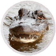 Gator Eyes Round Beach Towel by Carol Groenen