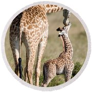 Masai Giraffe Giraffa Camelopardalis Round Beach Towel by Panoramic Images