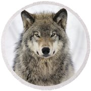 Timber Wolf Portrait Round Beach Towel by Tony Beck