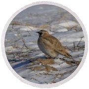 Winter Bird Round Beach Towel by Jeff Swan
