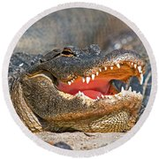 American Alligator Round Beach Towel by Millard H. Sharp