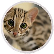 Asian Leopard Cub Round Beach Towel by Laura Fasulo