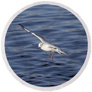 Flying Gull Round Beach Towel by Michal Boubin
