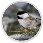 Black-capped Chickadee Round Beach Towel by Linda Freshwaters Arndt