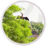 Anhinga Anhinga Anhinga On A Tree Round Beach Towel by Panoramic Images