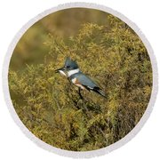 Belted Kingfisher With Fish Round Beach Towel by Anthony Mercieca