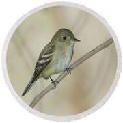 Acadian Flycatcher Round Beach Towel by Anthony Mercieca