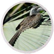 African Grey Hornbill Round Beach Towel by George Atsametakis