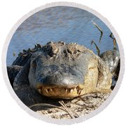 Alligator Approach Round Beach Towel by Al Powell Photography USA