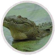 American Crocodile Round Beach Towel by Raymond Cramm