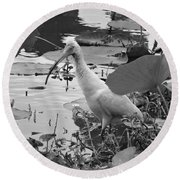 American White Ibis Black And White Round Beach Towel by Dan Sproul