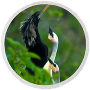 Anhinga Adult With Chicks Round Beach Towel by Mark Newman