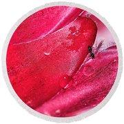 Ant Exploring Protea Petals Round Beach Towel by Kaye Menner