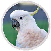 Australian Birds - Cockatoo Round Beach Towel by Kaye Menner