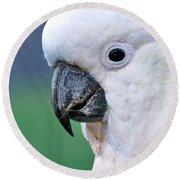Australian Birds - Cockatoo Up Close Round Beach Towel by Kaye Menner