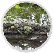 Baby Alligators Round Beach Towel by Dan Sproul