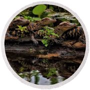 Baby Alligators Reflection Round Beach Towel by Dan Sproul