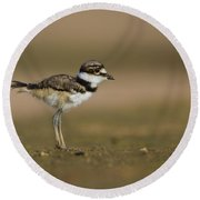 Baby Killdeer Round Beach Towel by Bryan Keil