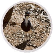 Banded Lapwing Round Beach Towel by Douglas Barnard
