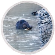 Beaver Chews On Stick Round Beach Towel by Chris Flees