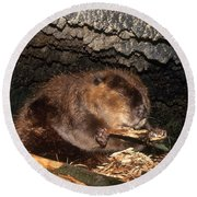 Beaver Eating In Lodge Round Beach Towel by Mark Newman