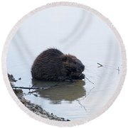 Beaver In The Shallows Round Beach Towel by Chris Flees