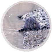 Beaver On Dry Land Round Beach Towel by Chris Flees