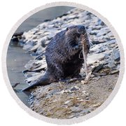 Beaver Sharpens Stick Round Beach Towel by Chris Flees