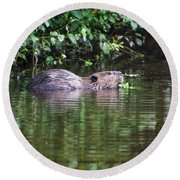 beaver swims in NC lake Round Beach Towel by Chris Flees