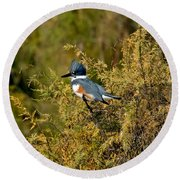 Belted Kingfisher Female Round Beach Towel by Anthony Mercieca