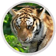 Bengal Tiger Portrait Round Beach Towel by Dan Sproul