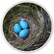 Birds Nest American Robin Round Beach Towel by Christina Rollo