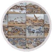 Birds Of Many Feathers Round Beach Towel by Betsy Knapp