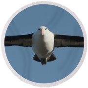 Black-browed Albatross Thalassarche Round Beach Towel by Panoramic Images