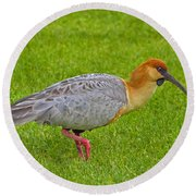 Black-faced Ibis Round Beach Towel by Tony Beck