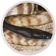 Black-headed Python Round Beach Towel by William H. Mullins
