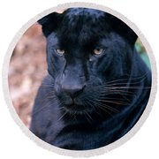 Black Leopard Round Beach Towel by Mark Newman