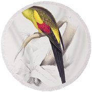 Black Tailed Parakeet Round Beach Towel by Edward Lear