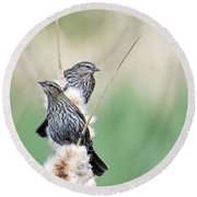 Blackbird Pair Round Beach Towel by Mike  Dawson