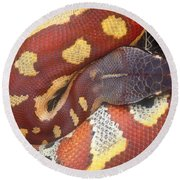 Blood Python Round Beach Towel by Art Wolfe