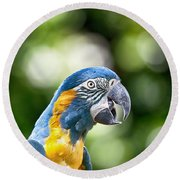 Blue And Gold Macaw V2 Round Beach Towel by Douglas Barnard
